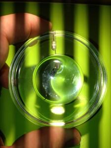 5mm großer Peilsender durch Lupe betrachtet (und Interferenzen von der Beleuchtung)